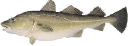 fiskur02